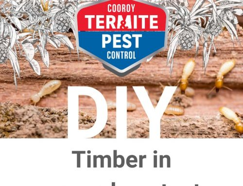 DIY | Prepare my home for termite season | Timber in ground and building contact