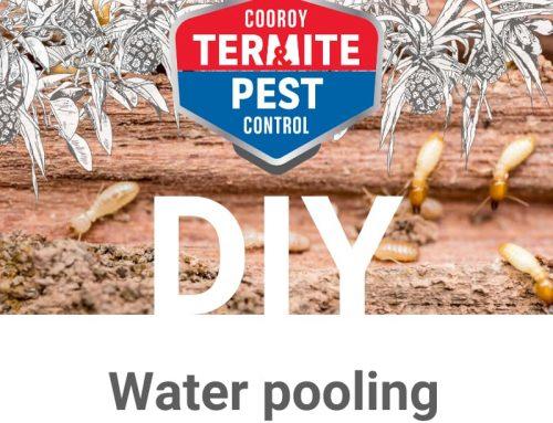 DIY | Prepare your home for termite season | Water pooling