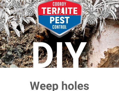 DIY | Prepare my home for termite season | Weep holes