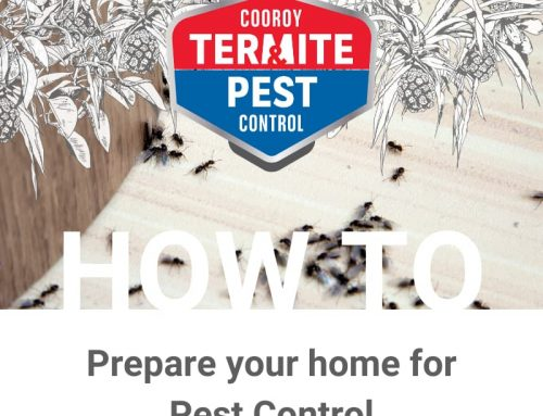 How to Prepare my Home for a Pest Control Service
