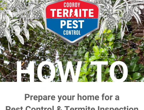 How to prepare my home for Termite Inspection & Pest Control