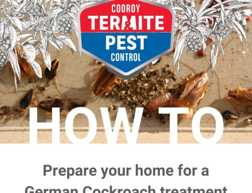 How to prepare your home for a German Cockroach treatment