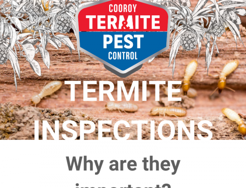 Why is it important to get an Annual Termite Inspection?