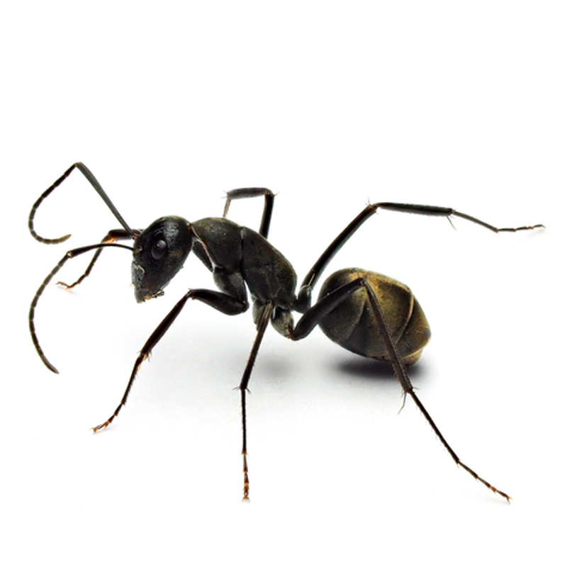 View Ant Library