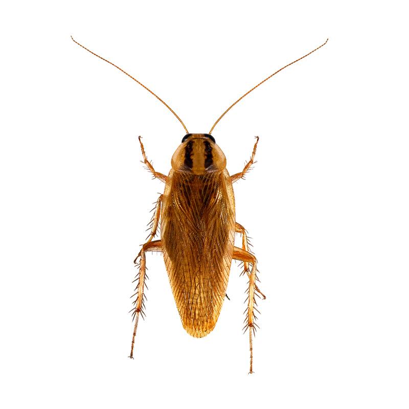 Pest control Sunshine Coast and Hinterland